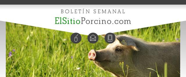 ElsitioPorcino
