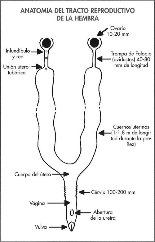 Pérdida embrionaria y fetal - Manejo sanitario y tratamiento de las ...