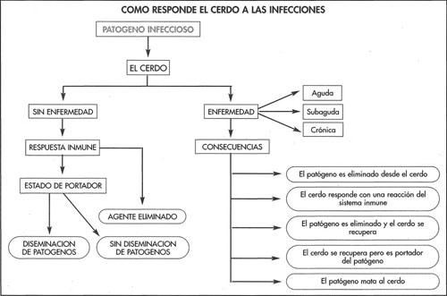 Inmunidad - Cómo responde el cerdo a la infección - Manejo sanitario ...