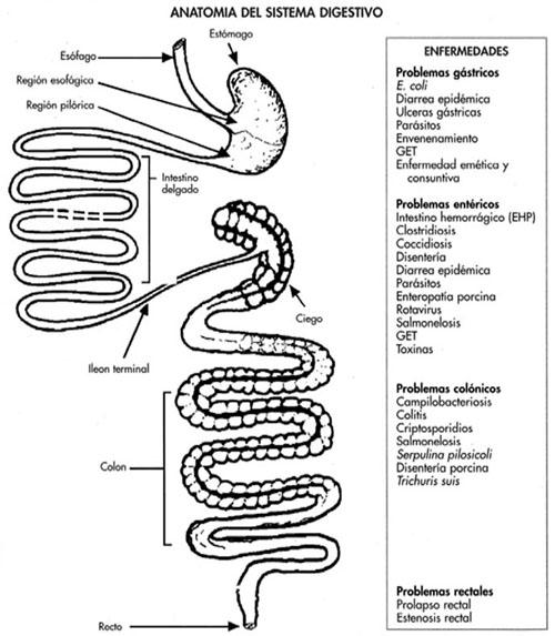 Sistema circulatorio - Manejo sanitario y tratamiento de las ...