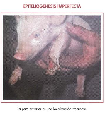 ldentificación de las causas de los cuadros cutáneos - Manejo ...