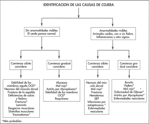 Identificación de los problemas en la cerda gestante - Manejo ...